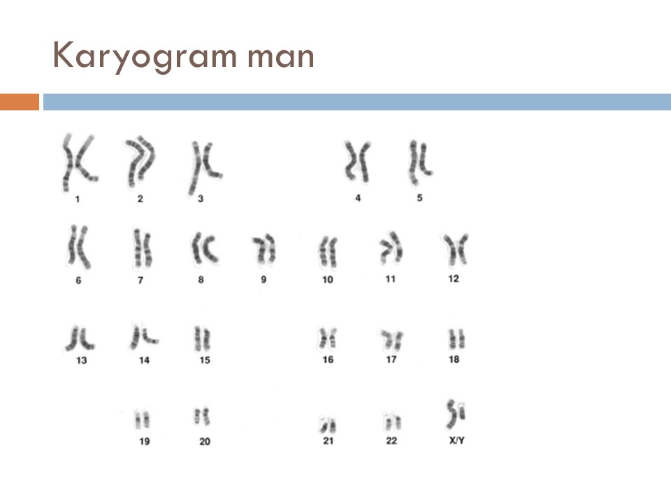 Karyogram man