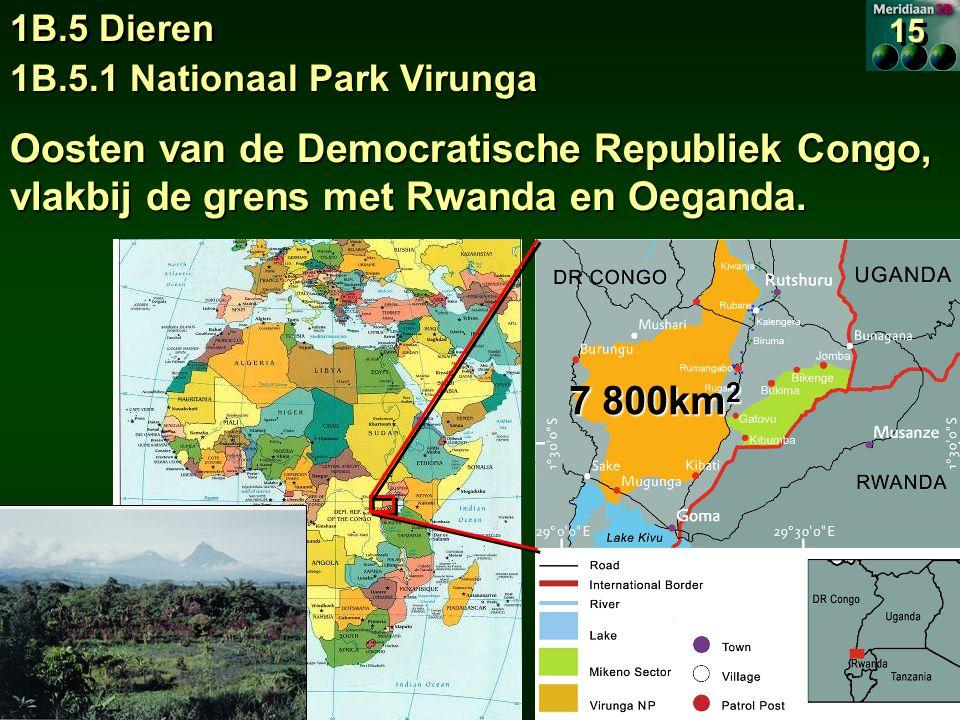 1B.5 Dieren 15. 1B.5.1 Nationaal Park Virunga. Oosten van de Democratische Republiek Congo, vlakbij de grens met Rwanda en Oeganda.
