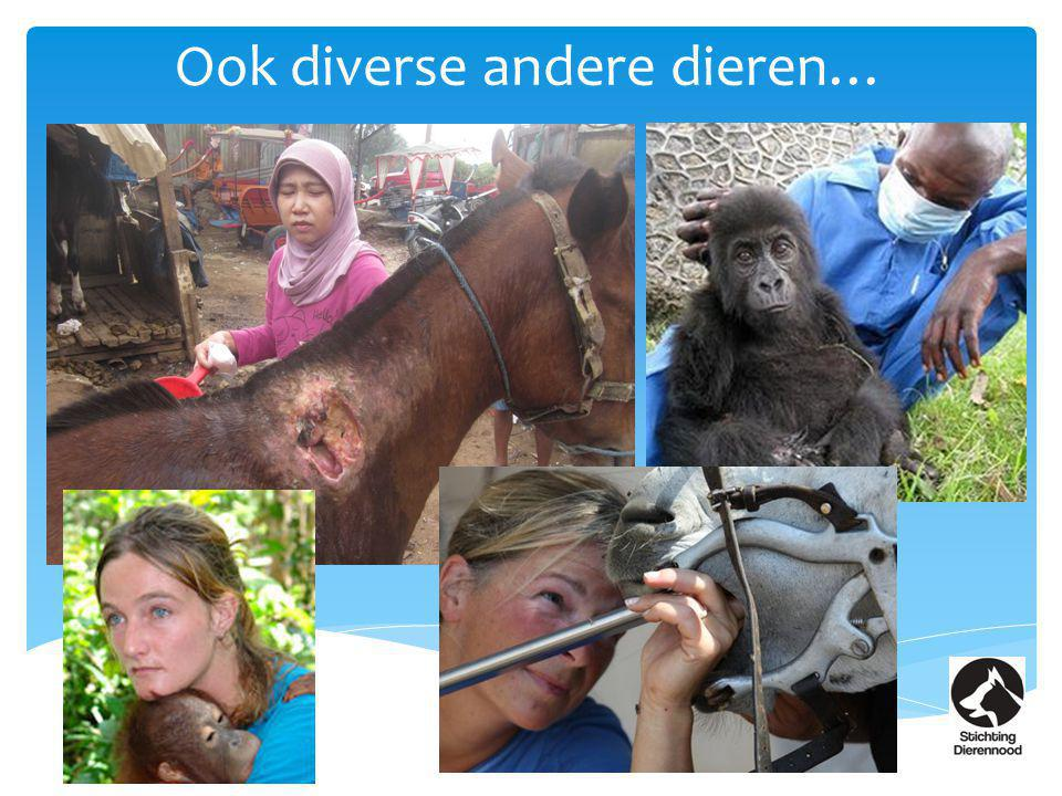 Ook diverse andere dieren…