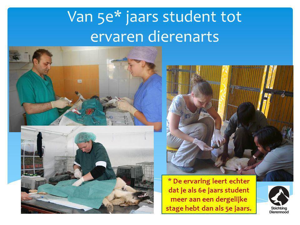 Van 5e* jaars student tot ervaren dierenarts