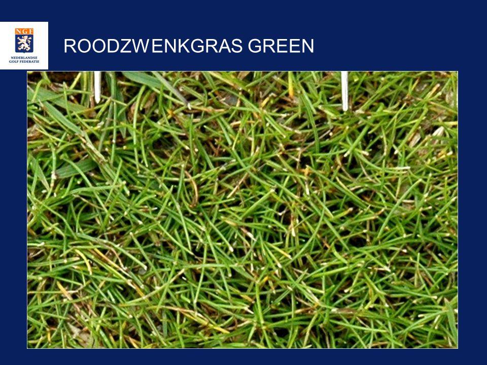 ROODZWENKGRAS GREEN