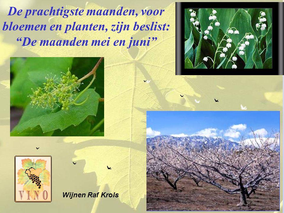 De prachtigste maanden, voor bloemen en planten, zijn beslist: De maanden mei en juni