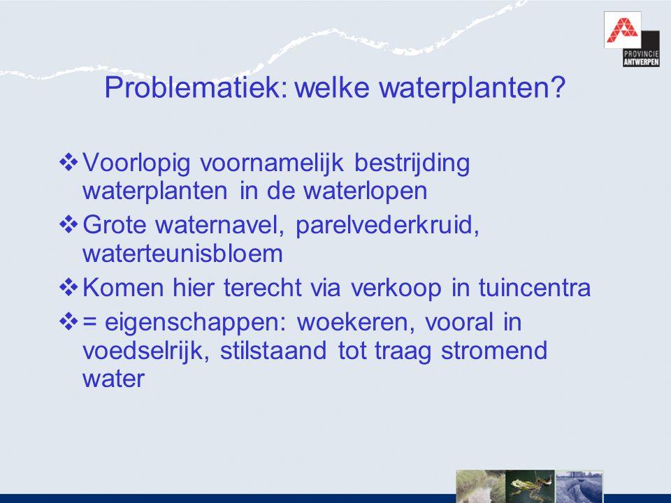 Problematiek: welke waterplanten