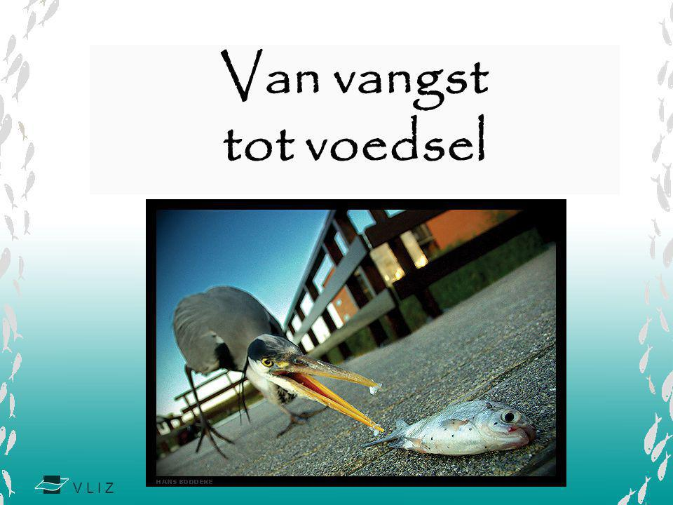 Van vangst tot voedsel Copyright Hans Boddeke Bron: http://www.photo.net