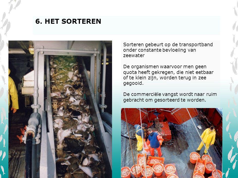 6. HET SORTEREN Sorteren gebeurt op de transportband onder constante bevloeiing van zeewater.