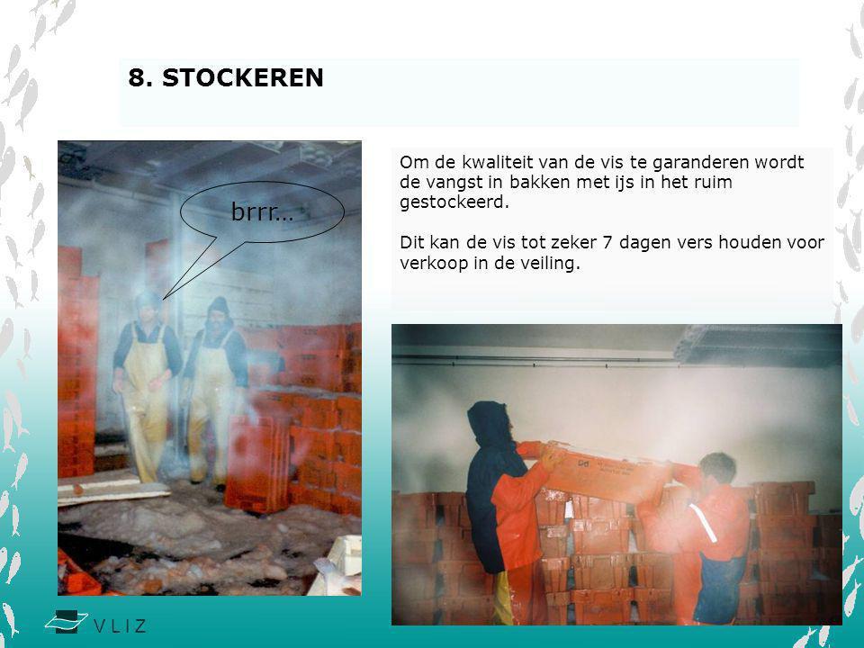 8. STOCKEREN Om de kwaliteit van de vis te garanderen wordt de vangst in bakken met ijs in het ruim gestockeerd.