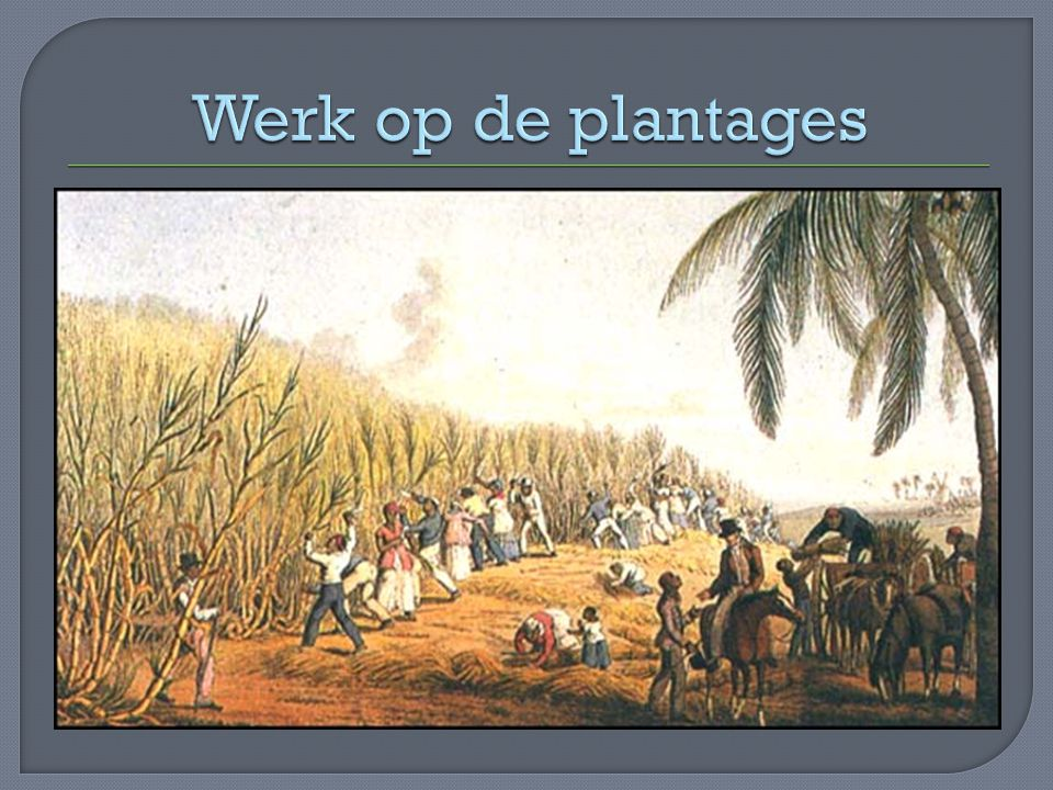 Werk op de plantages