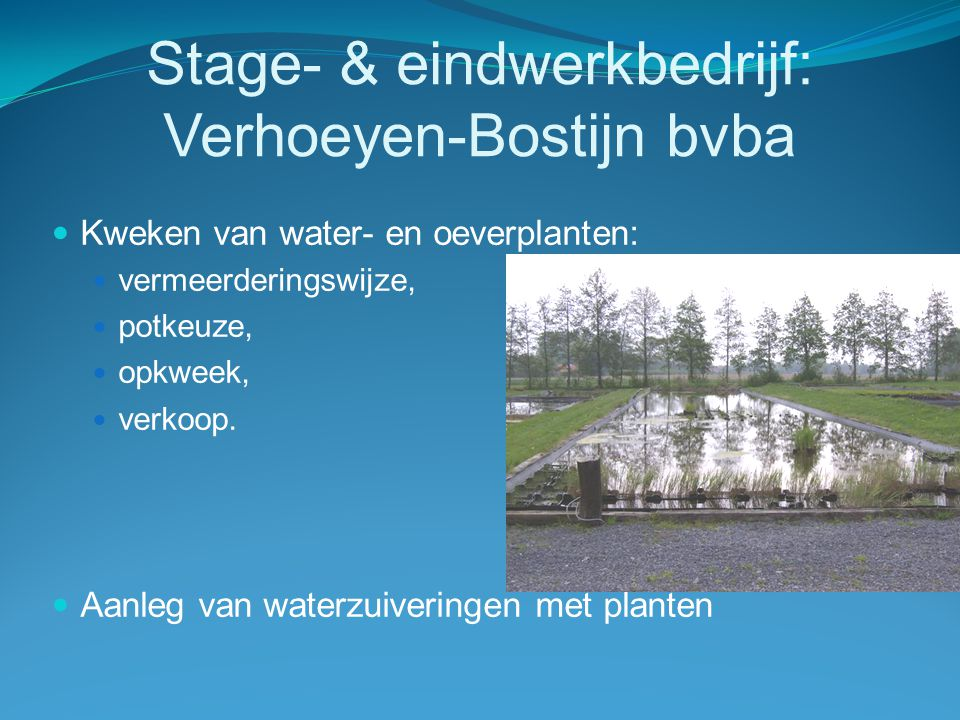 Stage- & eindwerkbedrijf: Verhoeyen-Bostijn bvba