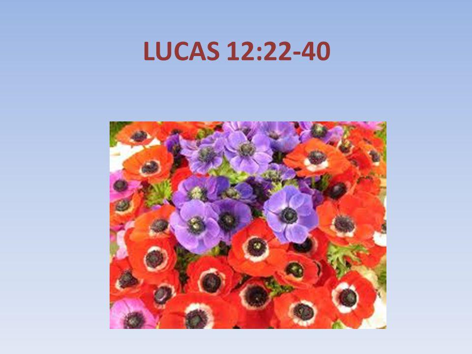 LUCAS 12:22-40