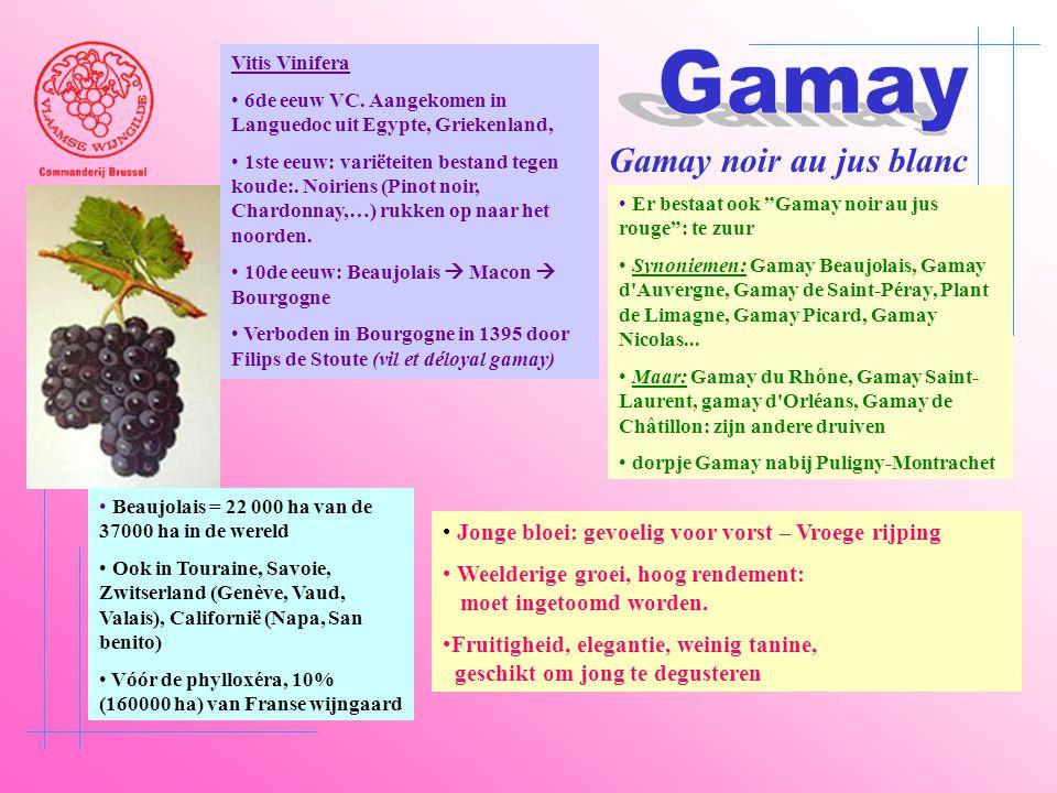 Gamay Gamay noir au jus blanc