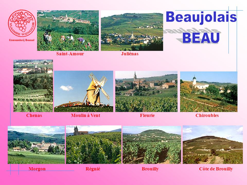 Beaujolais BEAU Saint-Amour Juliénas Chenas Moulin à Vent Fleurie