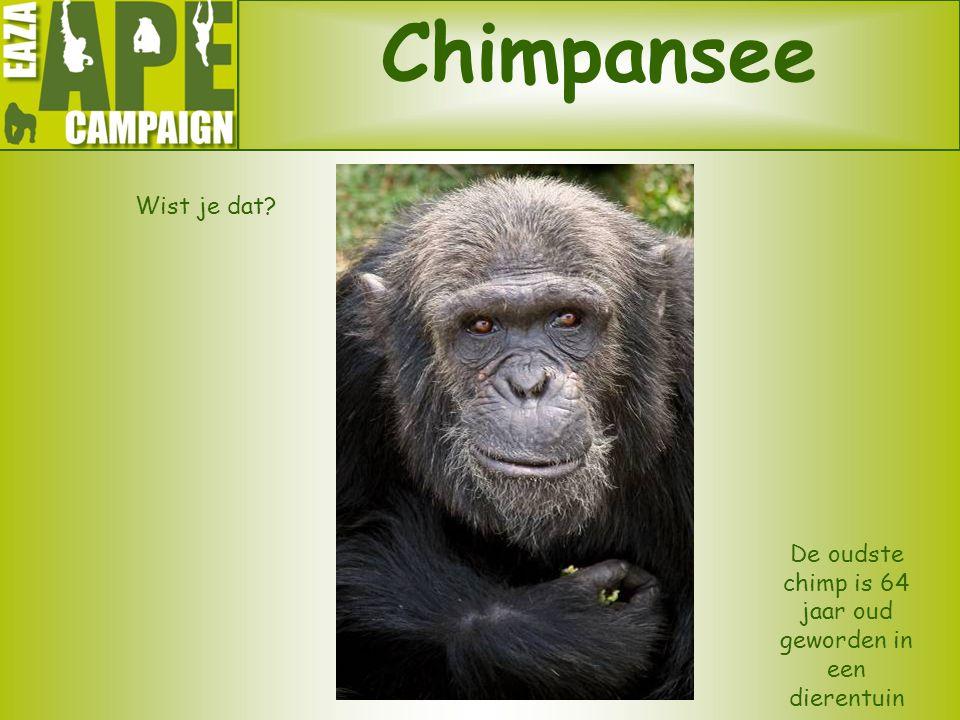 De oudste chimp is 64 jaar oud geworden in een dierentuin