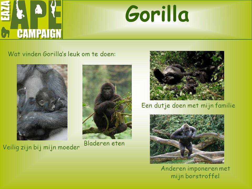 Gorilla Wat vinden Gorilla's leuk om te doen: