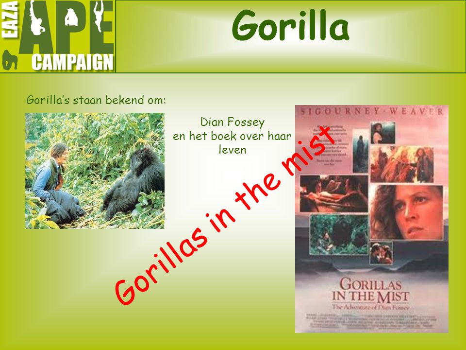 Gorilla Gorillas in the mist Gorilla's staan bekend om: