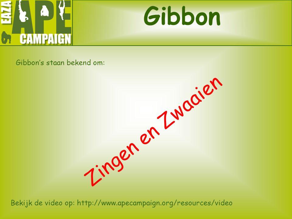 Gibbon Zingen en Zwaaien Gibbon's staan bekend om: