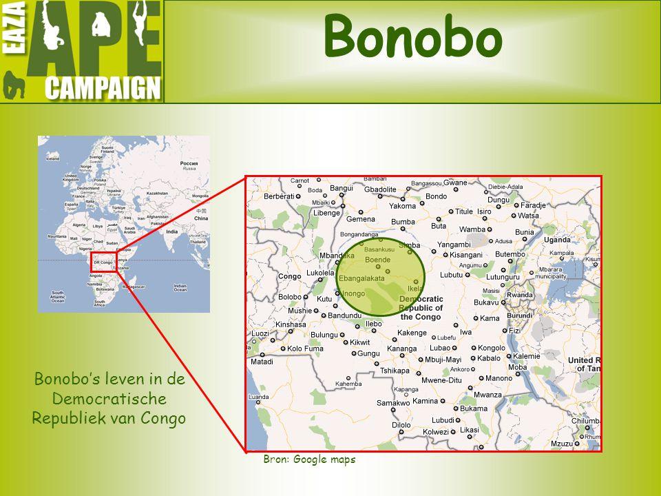Bonobo's leven in de Democratische Republiek van Congo