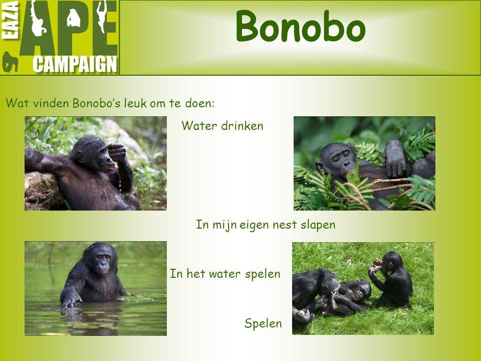 Bonobo Wat vinden Bonobo's leuk om te doen: Water drinken