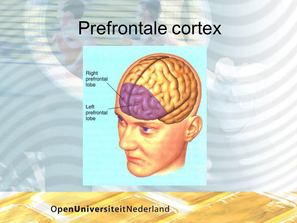 Prefrontale cortex Kofschip; meneer van dale wacht op antwoord