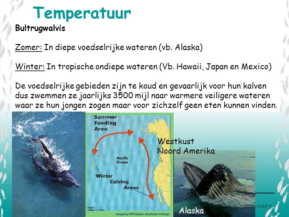 Temperatuur Bultrugwalvis