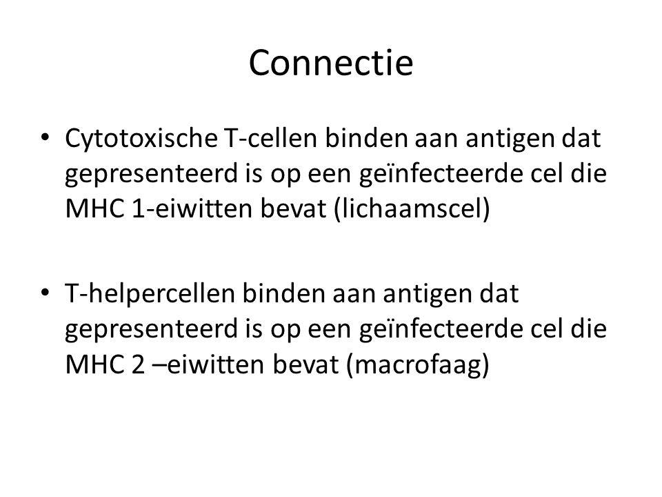 Connectie Cytotoxische T-cellen binden aan antigen dat gepresenteerd is op een geïnfecteerde cel die MHC 1-eiwitten bevat (lichaamscel)