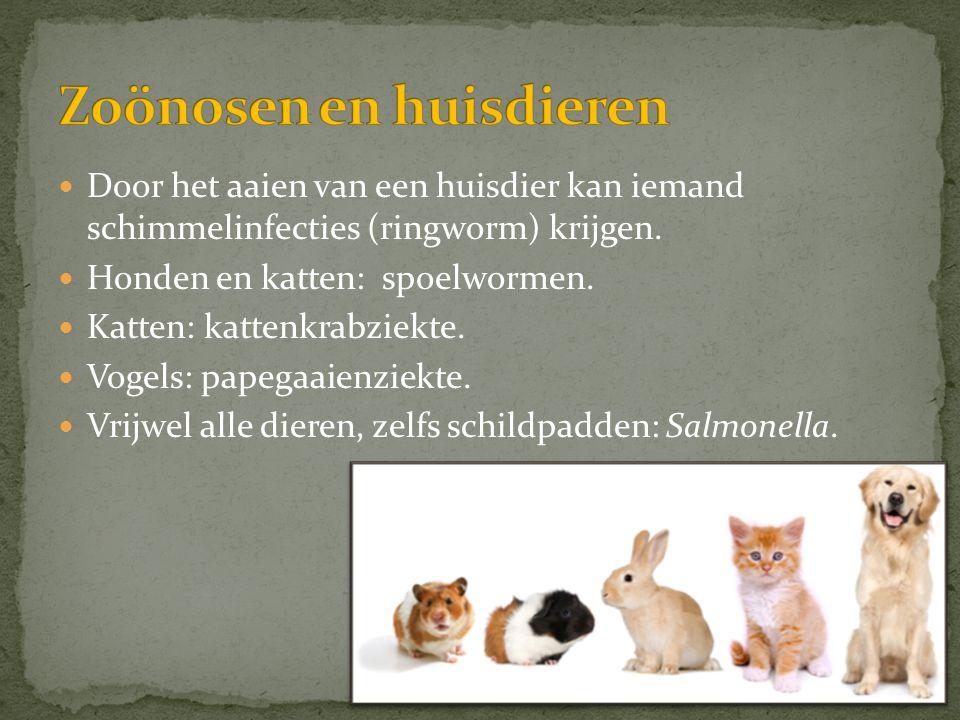 Zoönosen en huisdieren