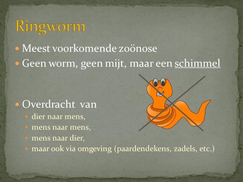 Ringworm Meest voorkomende zoönose