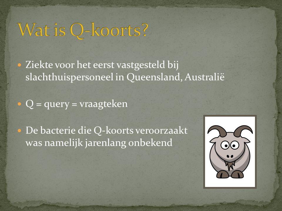 Wat is Q-koorts Ziekte voor het eerst vastgesteld bij slachthuispersoneel in Queensland, Australië.