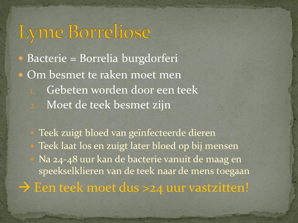 Lyme Borreliose  Een teek moet dus >24 uur vastzitten!