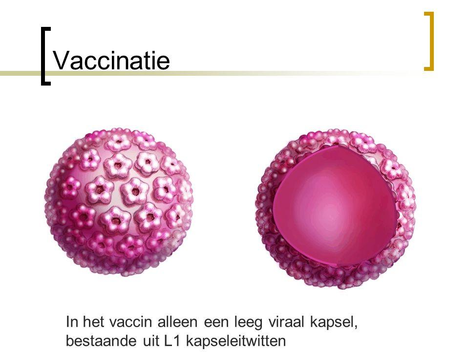 Vaccinatie In het vaccin alleen een leeg viraal kapsel, bestaande uit L1 kapseleitwitten