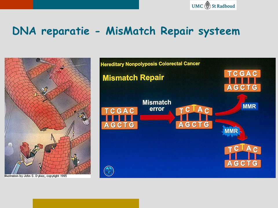 DNA reparatie - MisMatch Repair systeem