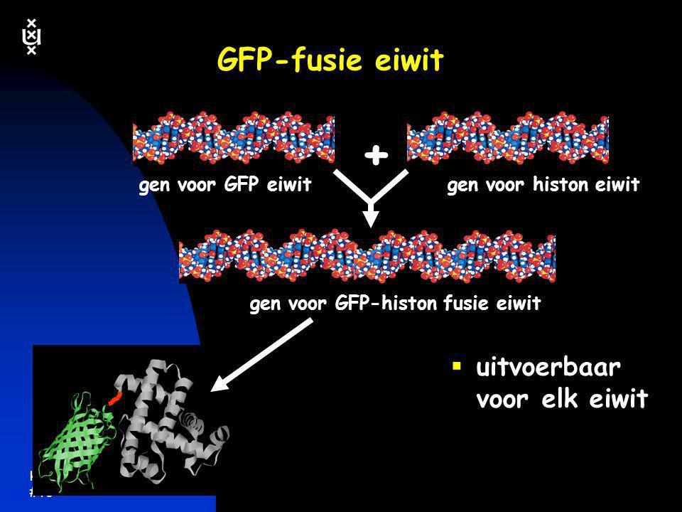 + GFP-fusie eiwit uitvoerbaar voor elk eiwit gen voor GFP eiwit