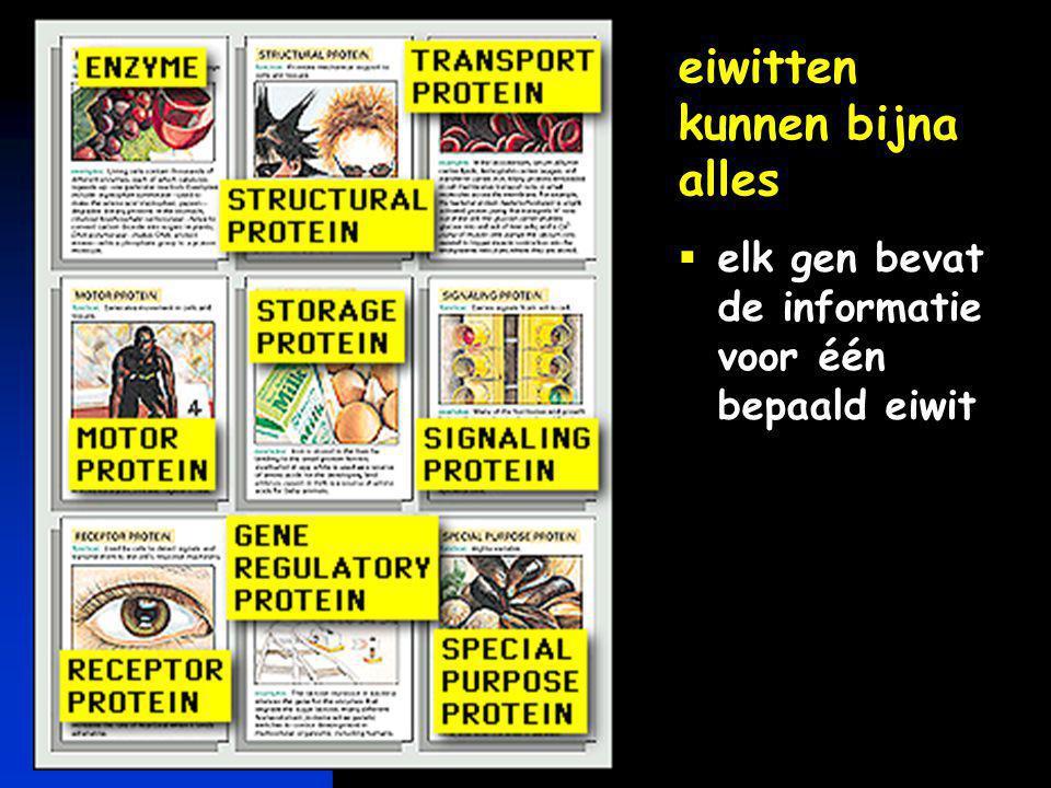 eiwitten kunnen bijna alles