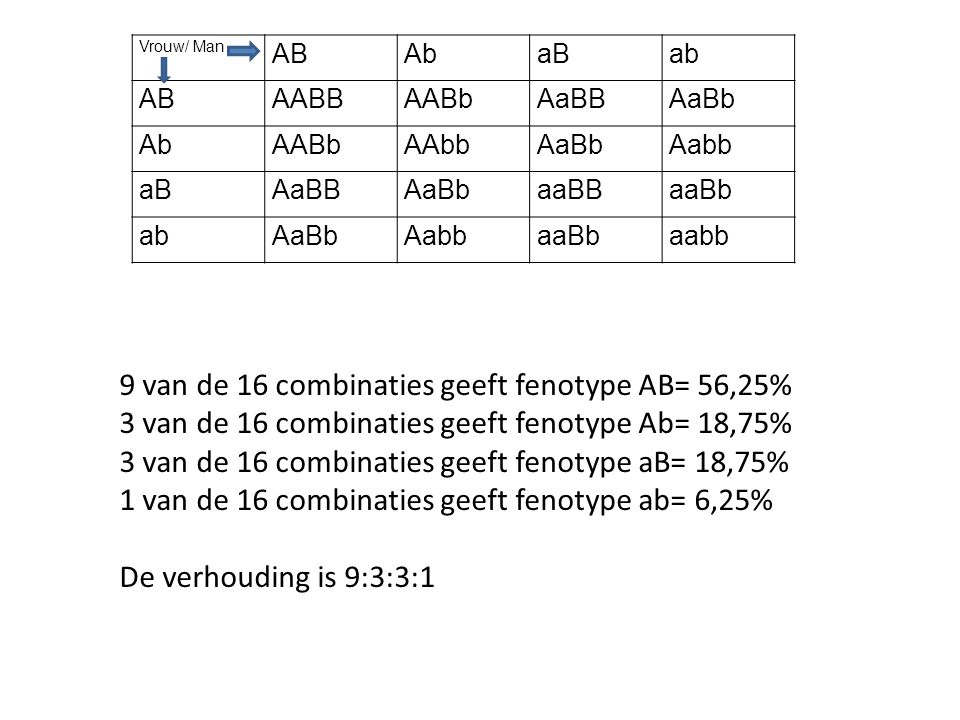 9 van de 16 combinaties geeft fenotype AB= 56,25%