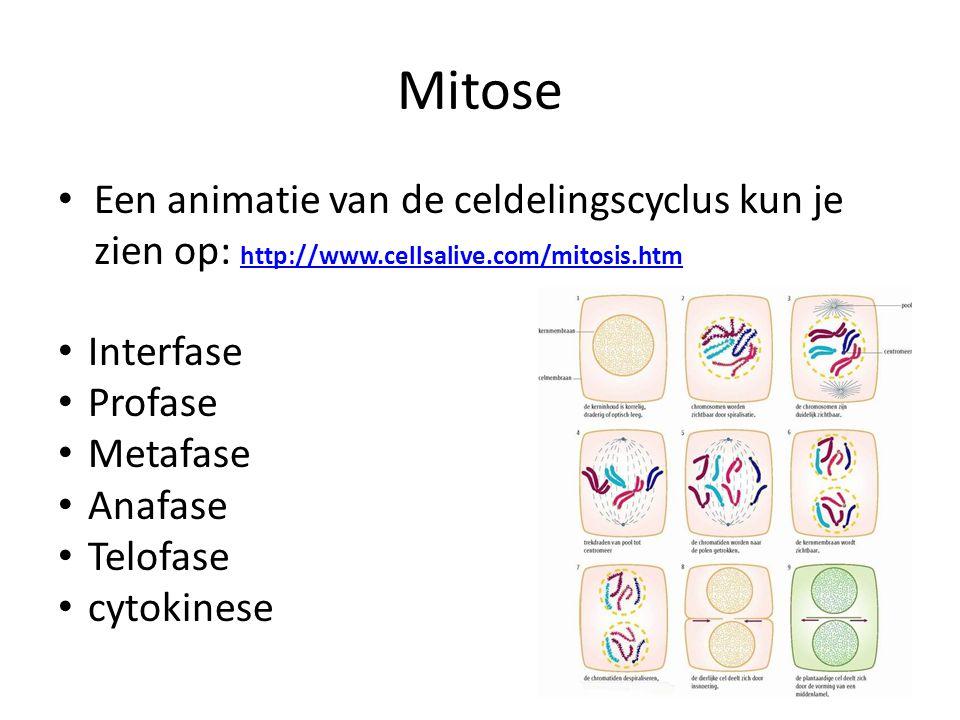 Mitose Een animatie van de celdelingscyclus kun je zien op: http://www.cellsalive.com/mitosis.htm. Interfase.
