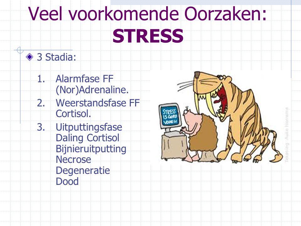 Veel voorkomende Oorzaken: STRESS