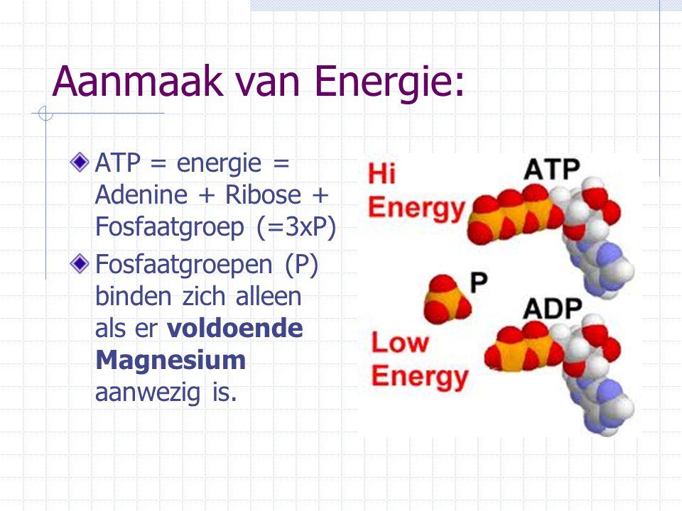 Aanmaak van Energie: ATP = energie = Adenine + Ribose + Fosfaatgroep (=3xP)