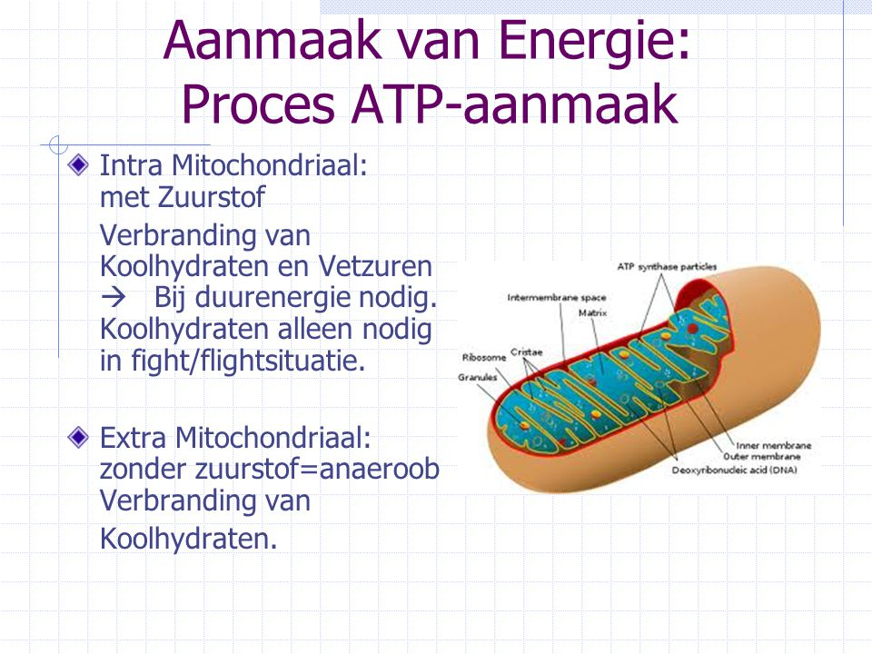 Aanmaak van Energie: Proces ATP-aanmaak