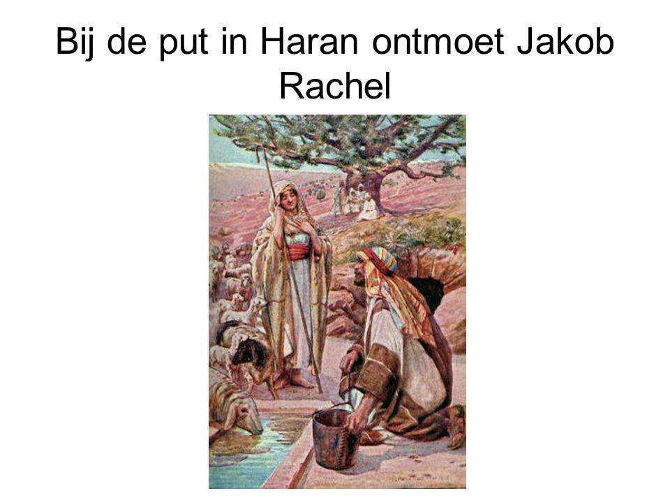 Bij de put in Haran ontmoet Jakob Rachel
