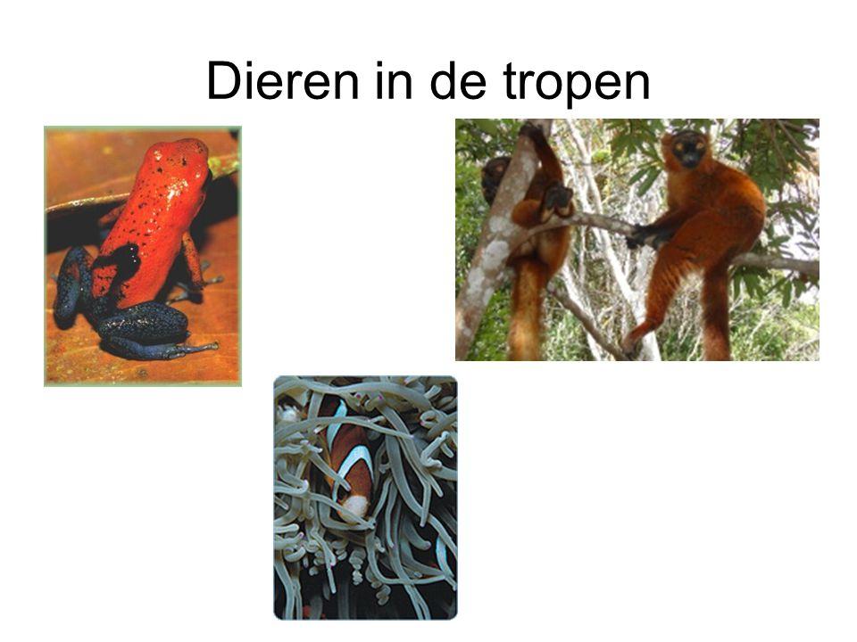 Dieren in de tropen