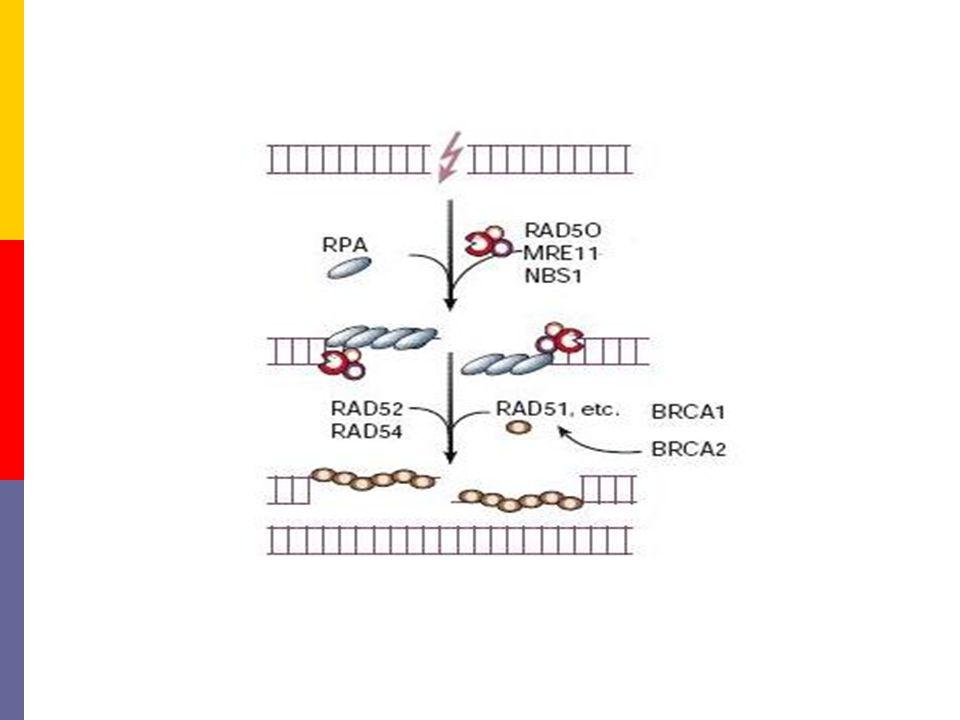 Pre-synapsis Herkennen van de schade 'End processing'
