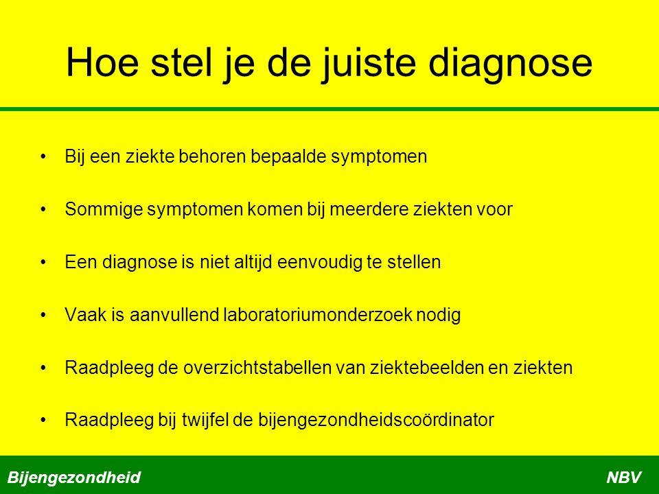 Hoe stel je de juiste diagnose