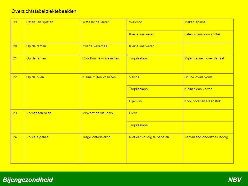 Bijengezondheid NBV Overzichtstabel ziektebeelden 19 Raten en spleten
