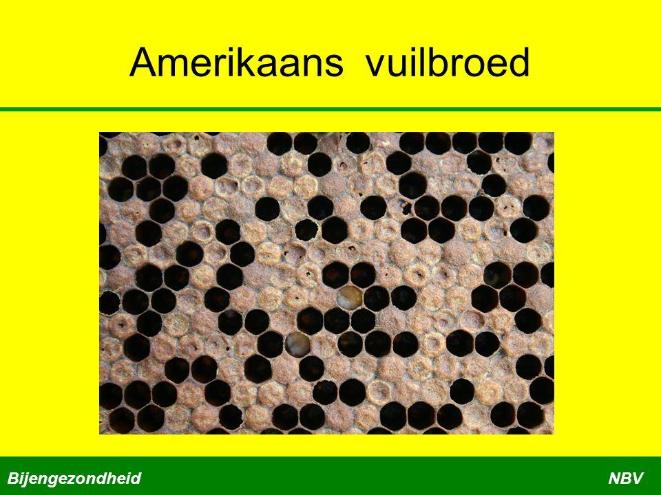 Amerikaans vuilbroed Bijengezondheid NBV Cursus bijengezondheid deel 2