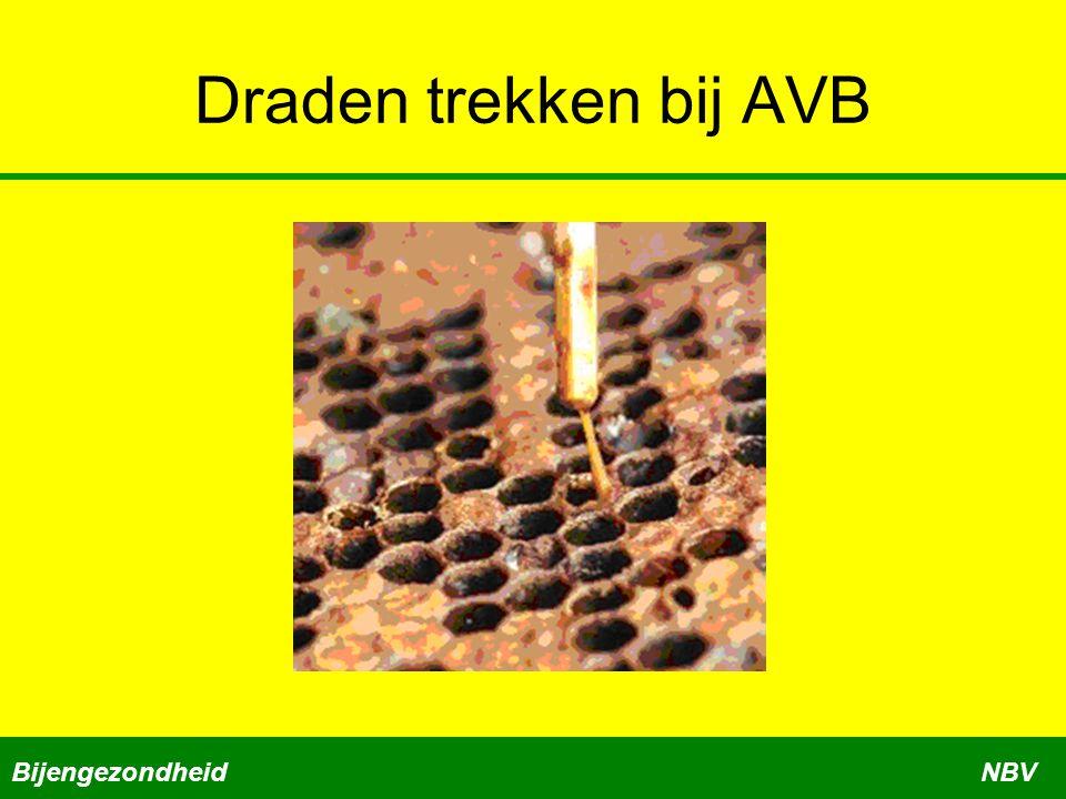 Draden trekken bij AVB Bijengezondheid NBV