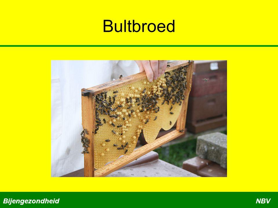 Bultbroed Bijengezondheid NBV