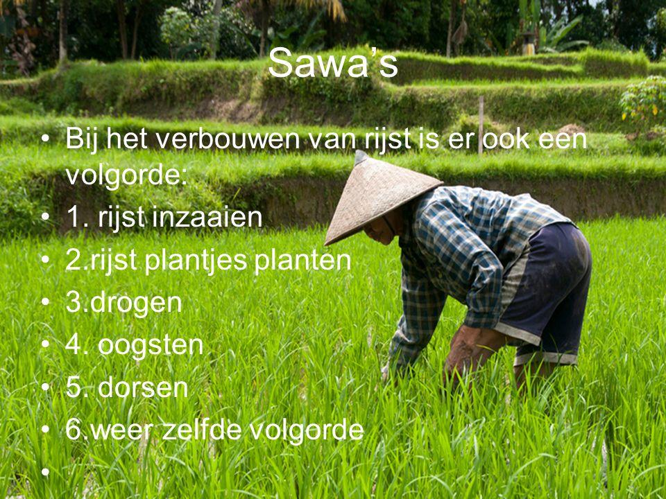 Sawa's Bij het verbouwen van rijst is er ook een volgorde: