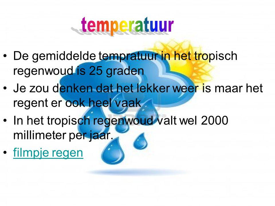 temperatuur De gemiddelde tempratuur in het tropisch regenwoud is 25 graden. Je zou denken dat het lekker weer is maar het regent er ook heel vaak.