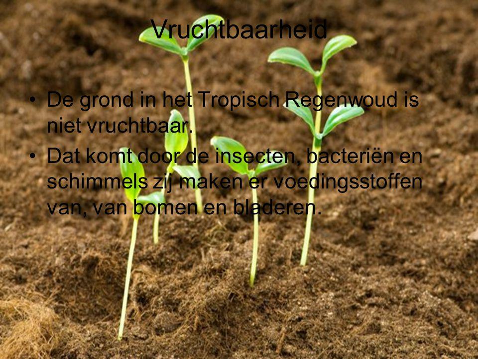 Vruchtbaarheid De grond in het Tropisch Regenwoud is niet vruchtbaar.
