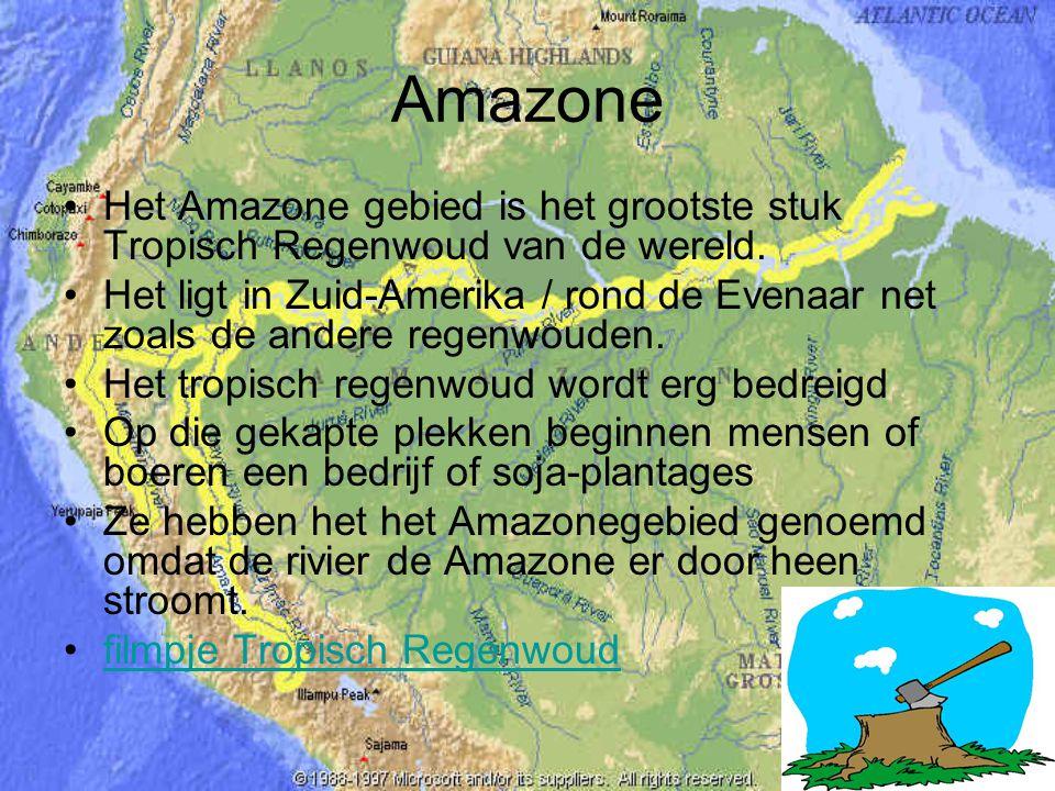 Amazone Het Amazone gebied is het grootste stuk Tropisch Regenwoud van de wereld.
