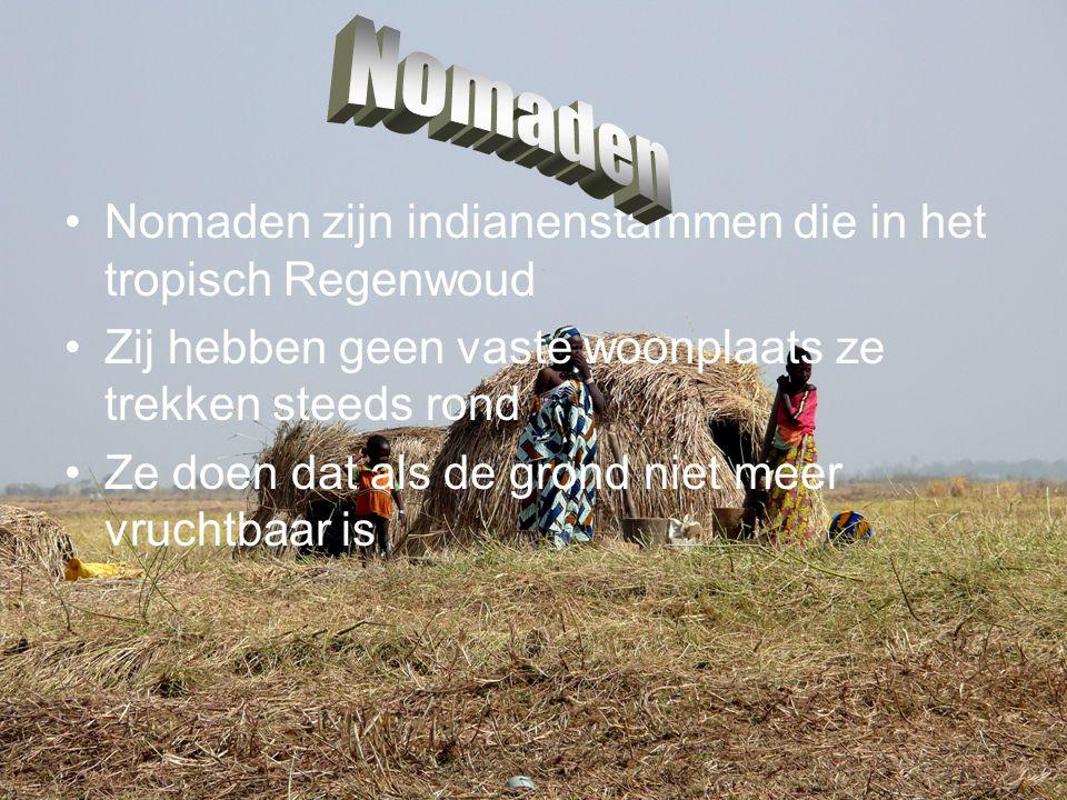 Nomaden Nomaden zijn indianenstammen die in het tropisch Regenwoud